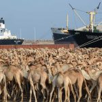Training Workshop on Challenges of Livestock sector in Somalia